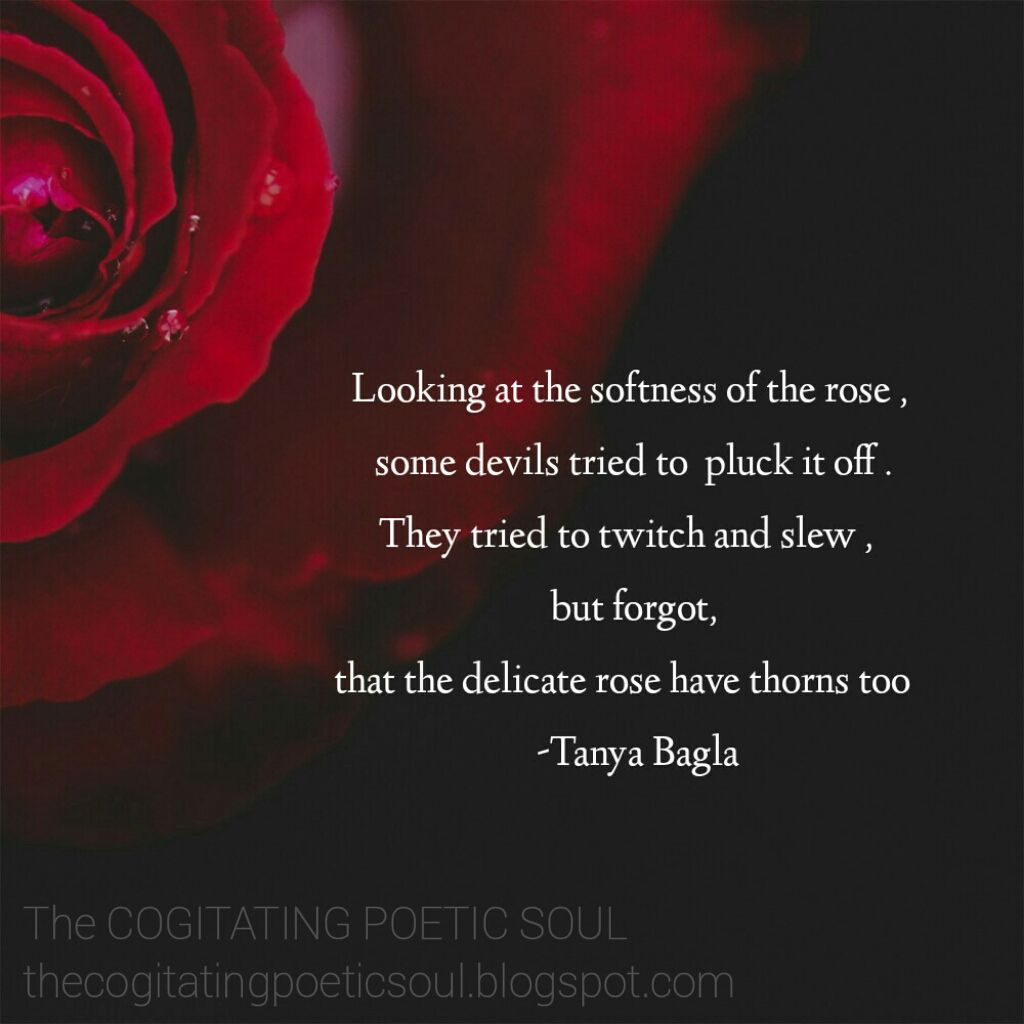 The Cogitating Poetic Soul The Delicate Rose Have Thorns Too