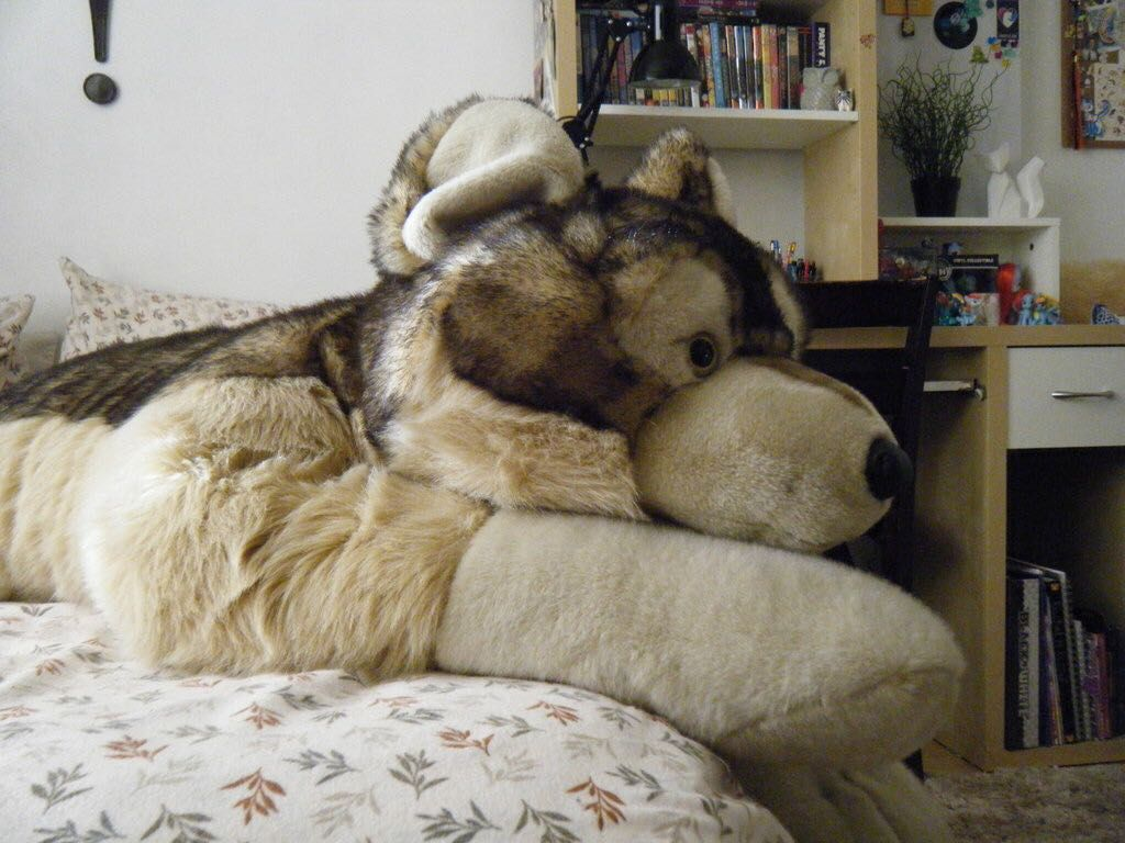 Giant Wolf Plush Best Image Of Wolf Tripimages Co