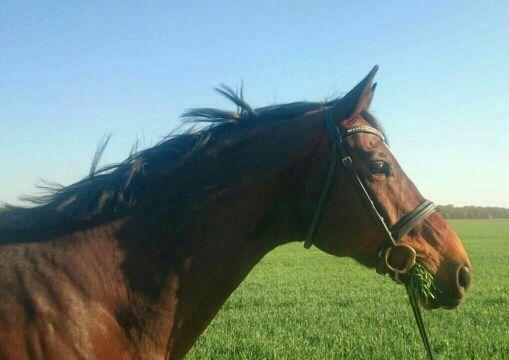 Fabelhaft Meine Reitlehre - Hustende Pferde - Wattpad &WF_48