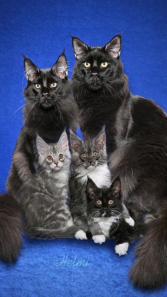 Warrior Cats Spoofs by Cutestuffrocks on DeviantArt |Warrior Cats Spoof