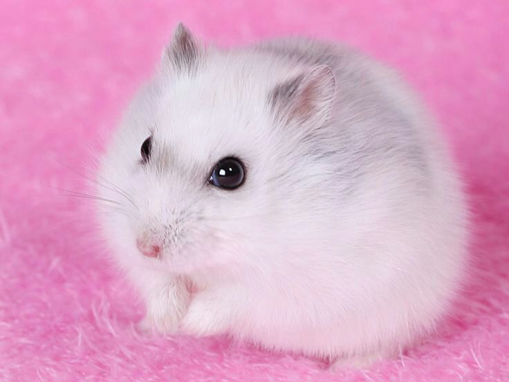 Hamster rencontre rencontre gay 03 yvetot quel est