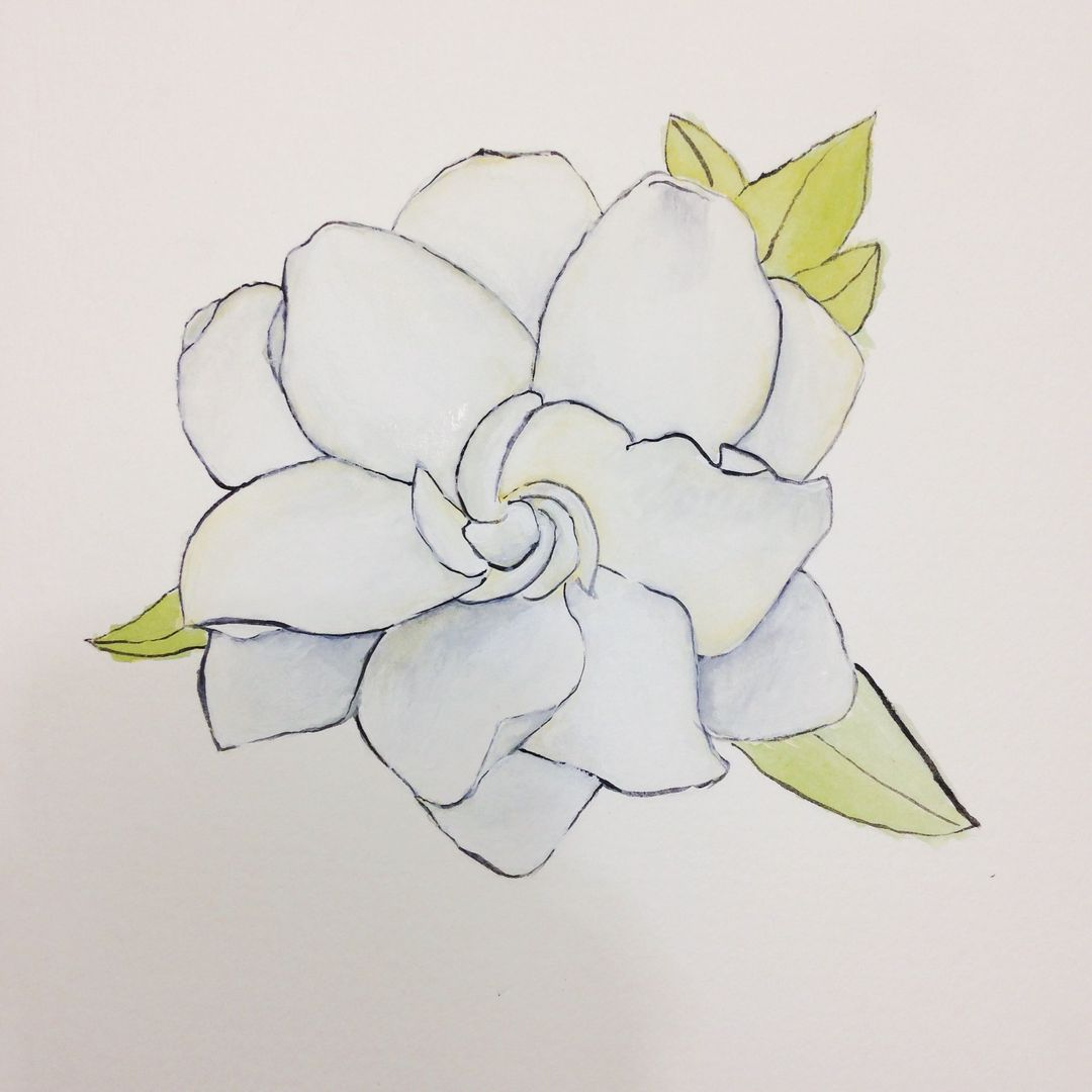 Gallery For gt Gardenia Drawing