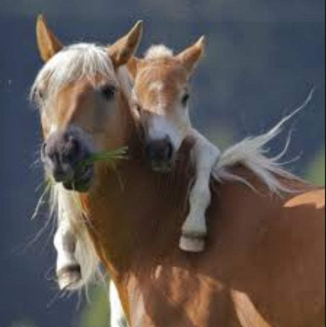 Wild horses and facts u should know about them - Horse facts 78 ...
