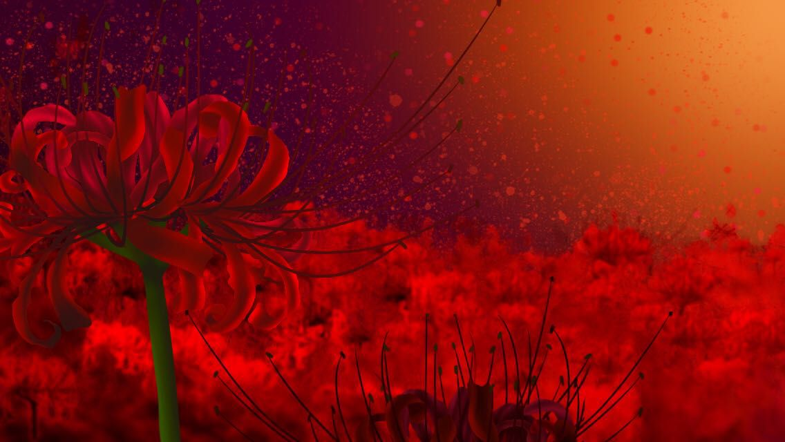 Guide To Flower Symbolism Red Spider Lily Wattpad