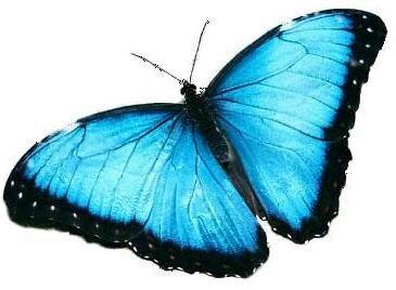La Chica Del Tatuaje De La Mariposa Azul El Efecto Mariposa Wattpad
