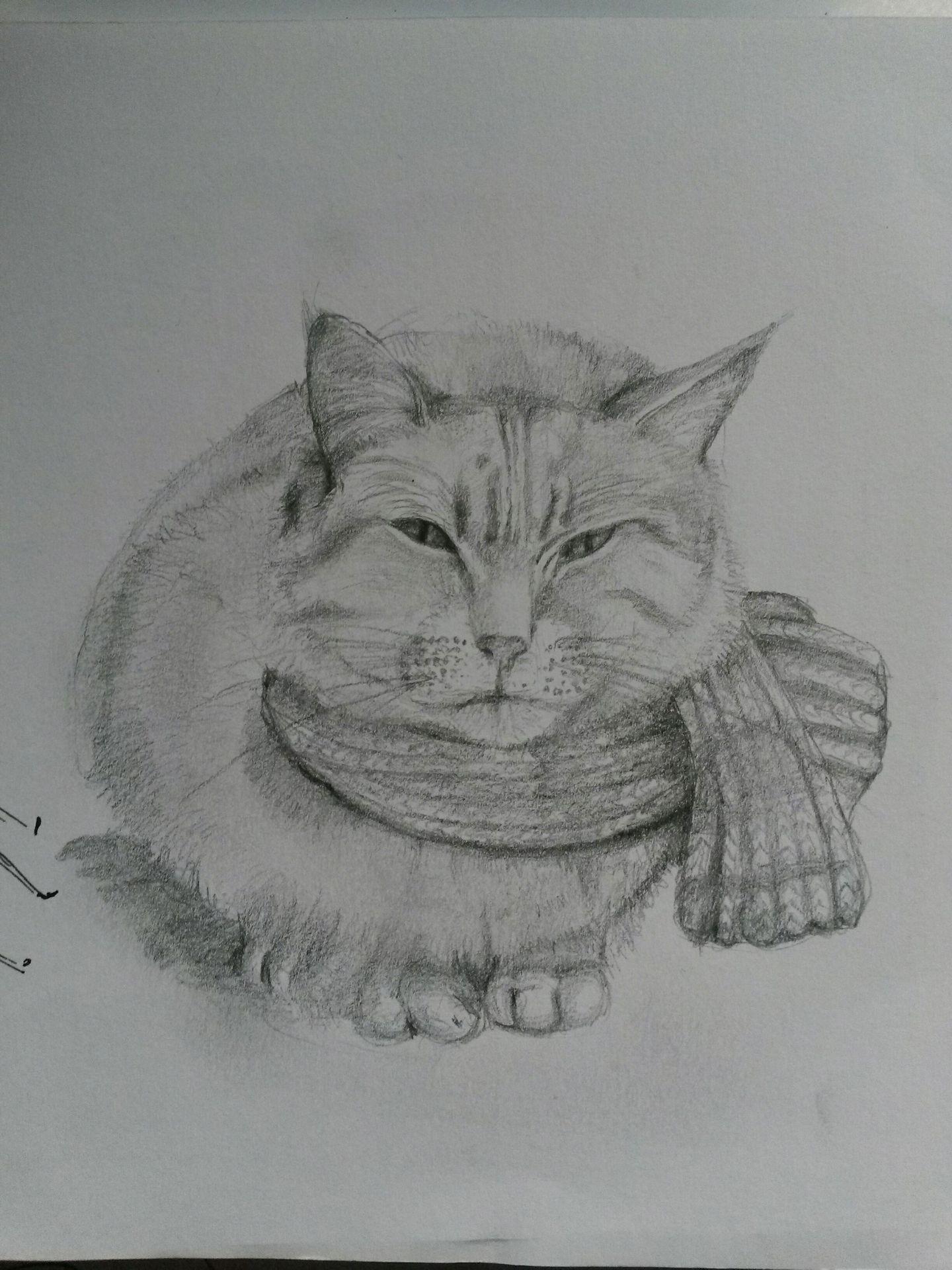 Wolf Zeichnen Bleistift Einfach