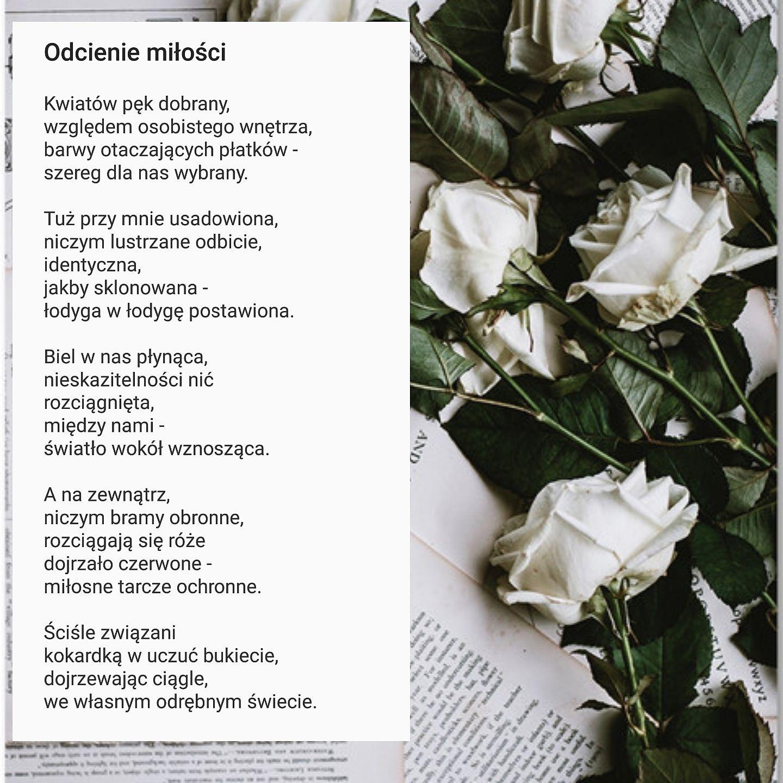Czerwone Róże Kwitnące Odcienie Miłości Wattpad