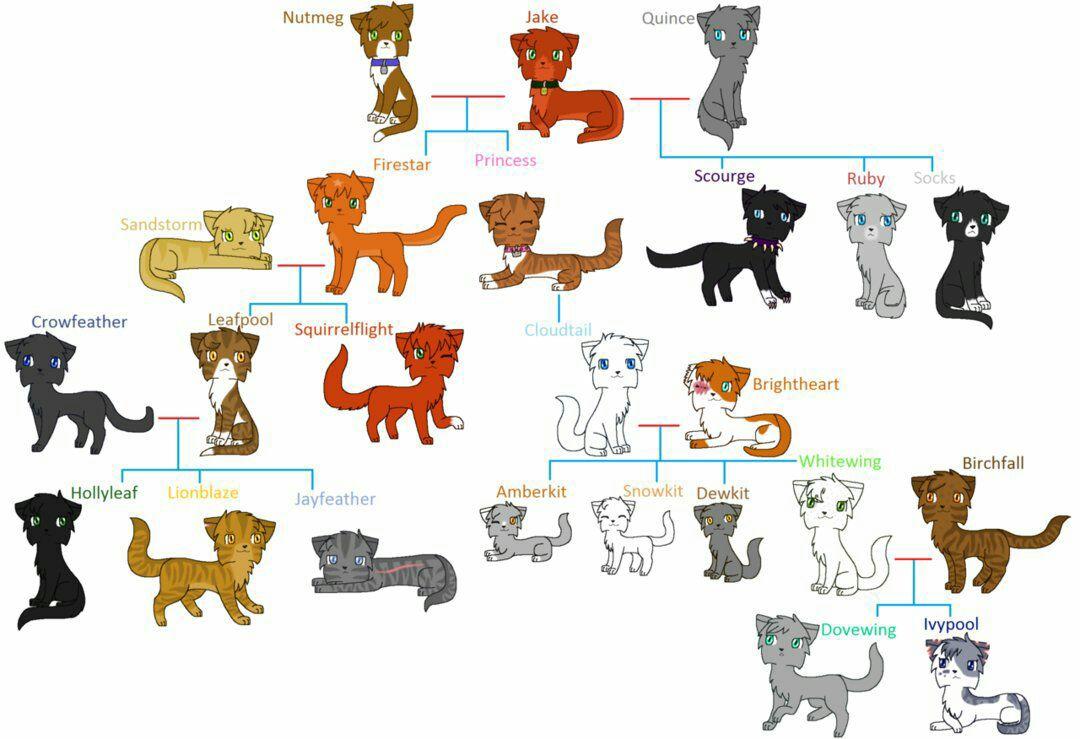 Curiosidades y Secretos de los Gatos Guerreros - Árbol de ...