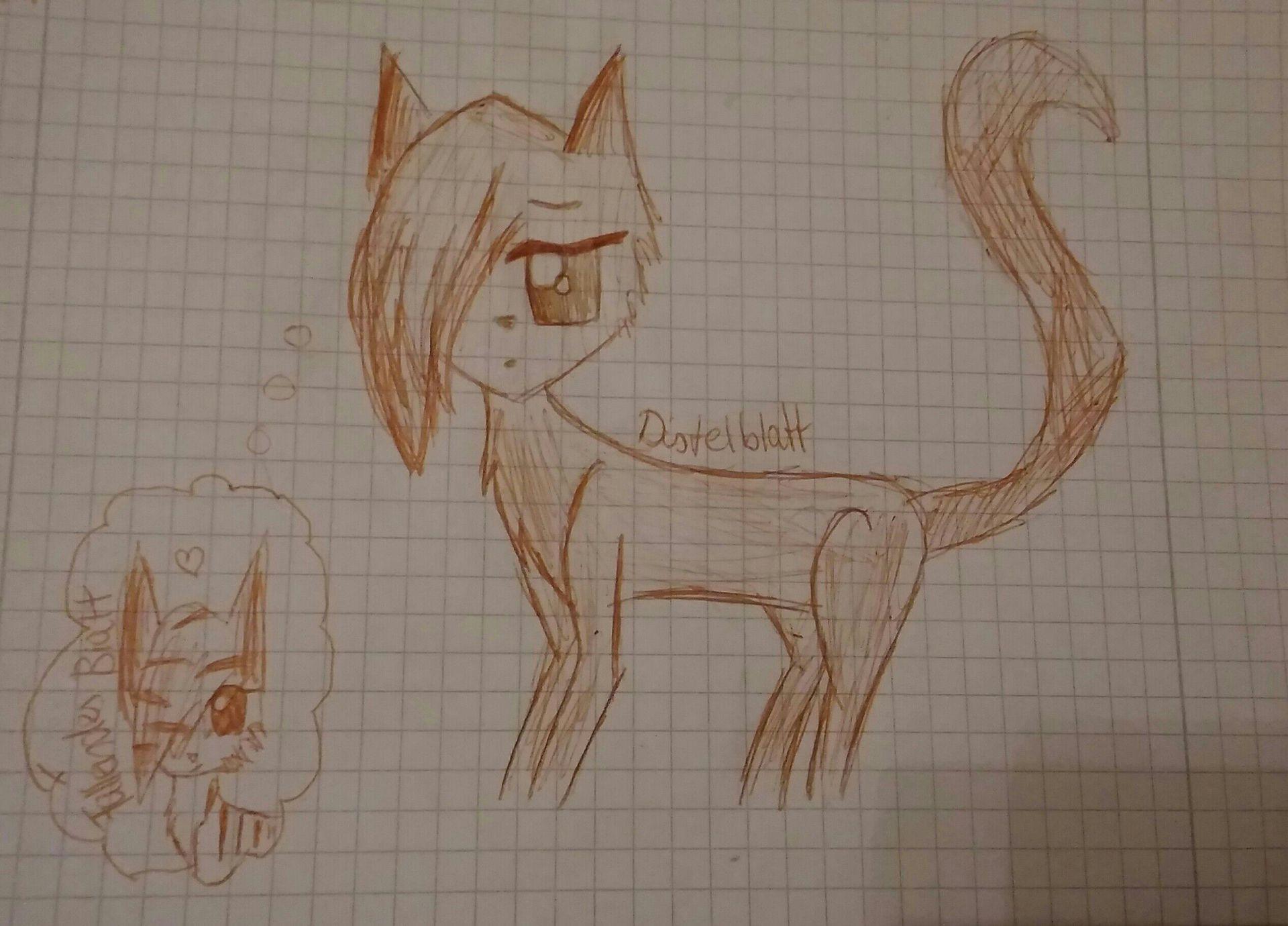 Meine Warrior Cats Ff Distelblatt Und Fallendes Blatt Wattpad