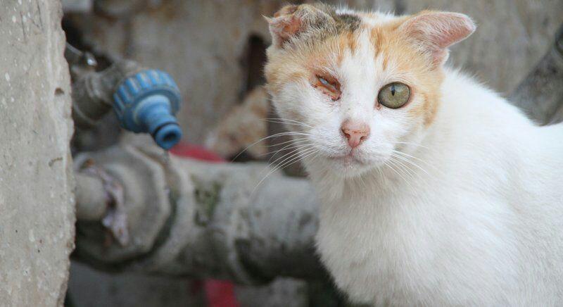 Steckbrief Von Den Autoren Von Warrior Cats