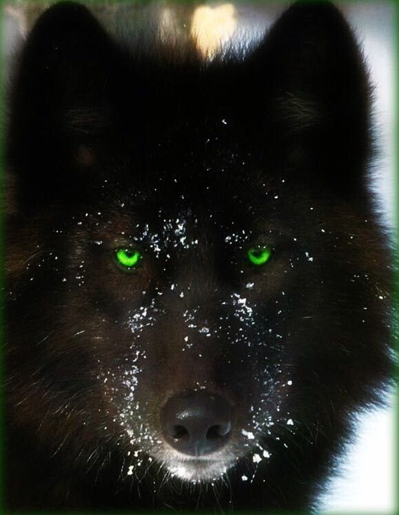 9 segni che stai uscendo con un lupo mannaro