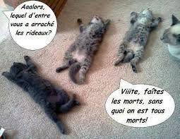 Citations Memes Et Images Drôle Xd Plan De Survie Chat