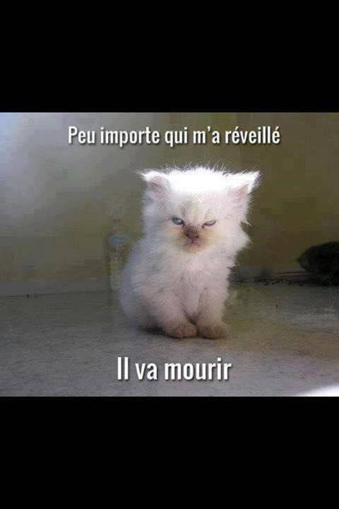 Citations Memes Et Images Drôle Xd Le Reveil D Un Chat
