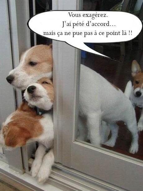 Citations Memes Et Images Drôle Xd Le Pet D Un Chien