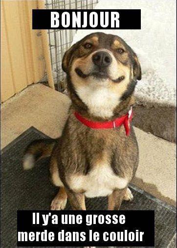 Citations, memes et images drôle XD - Bonjour...( chien ) - Wattpad