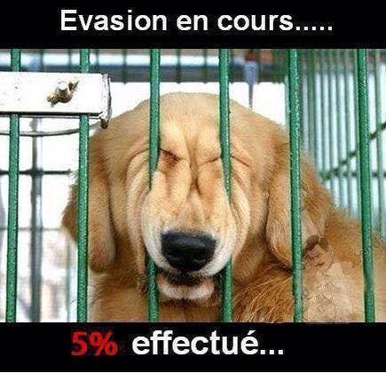 Citations Memes Et Images Drôle Xd Evasion En Cours