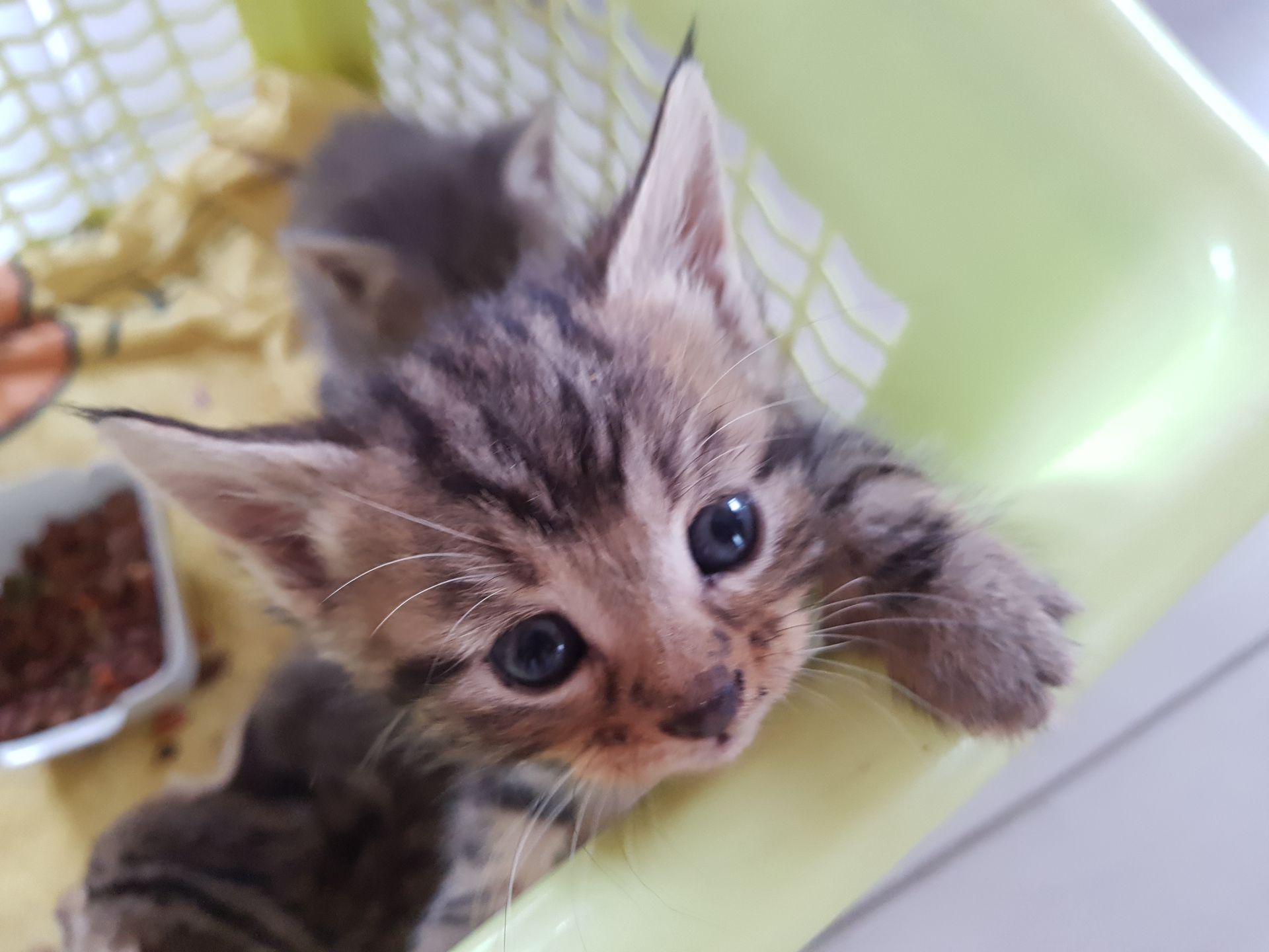 mignon adolescent chatte