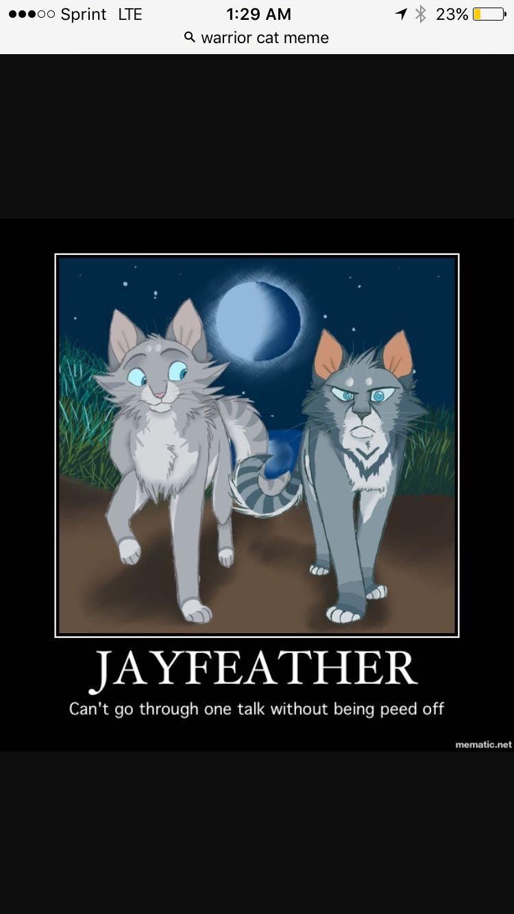 Warrior Cat Memes Jaybae Wattpad