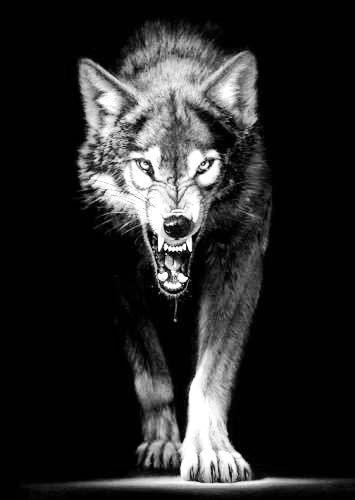 Très Frasi sui lupi~ (non solo) - ~19~ - Wattpad IF92