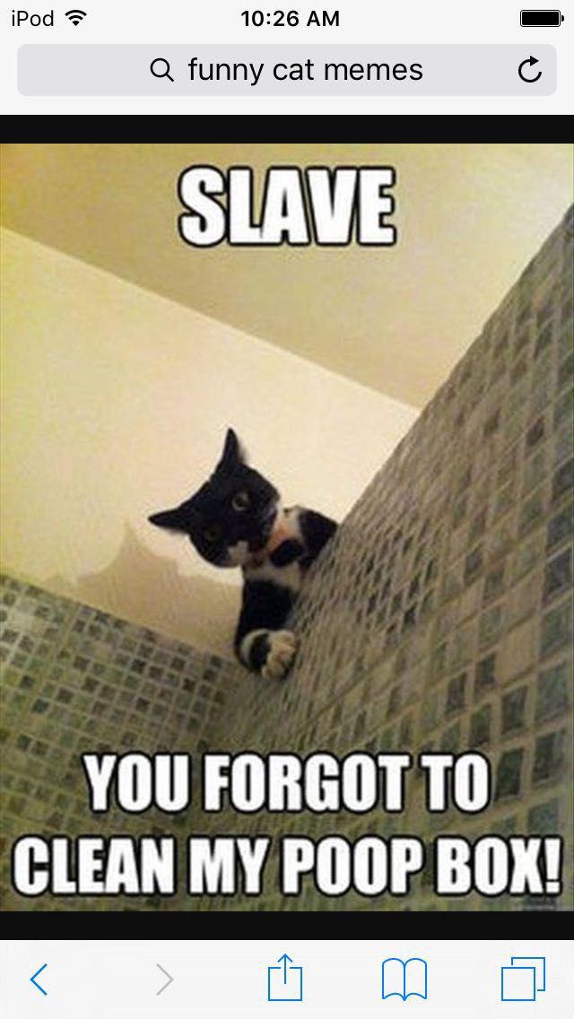 Funny Cute Cat Memes Clean It Wattpad
