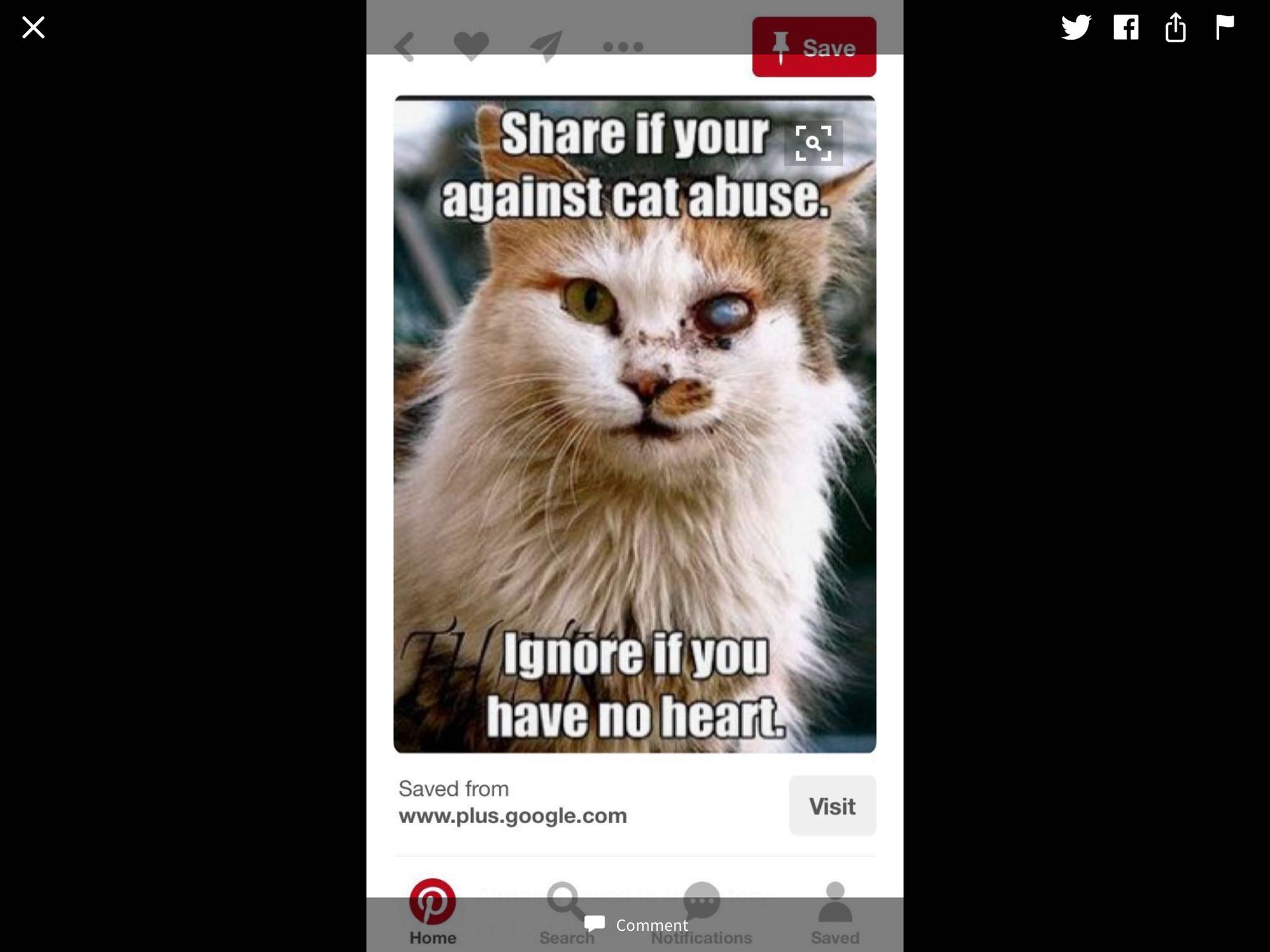 Random things (Tags and Updates ) - Stop Cat Abuse - Wattpad