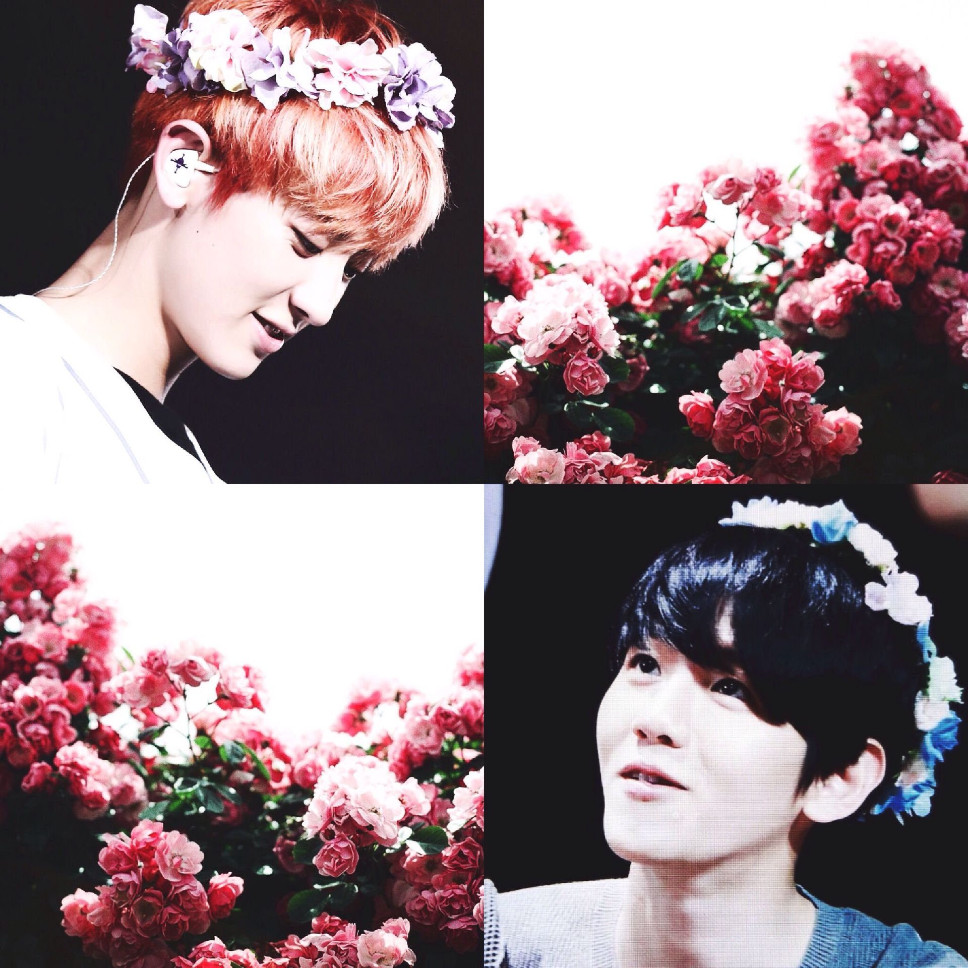 Exo Chanbaek One Only 16 Smile Flower Laughter Wattpad