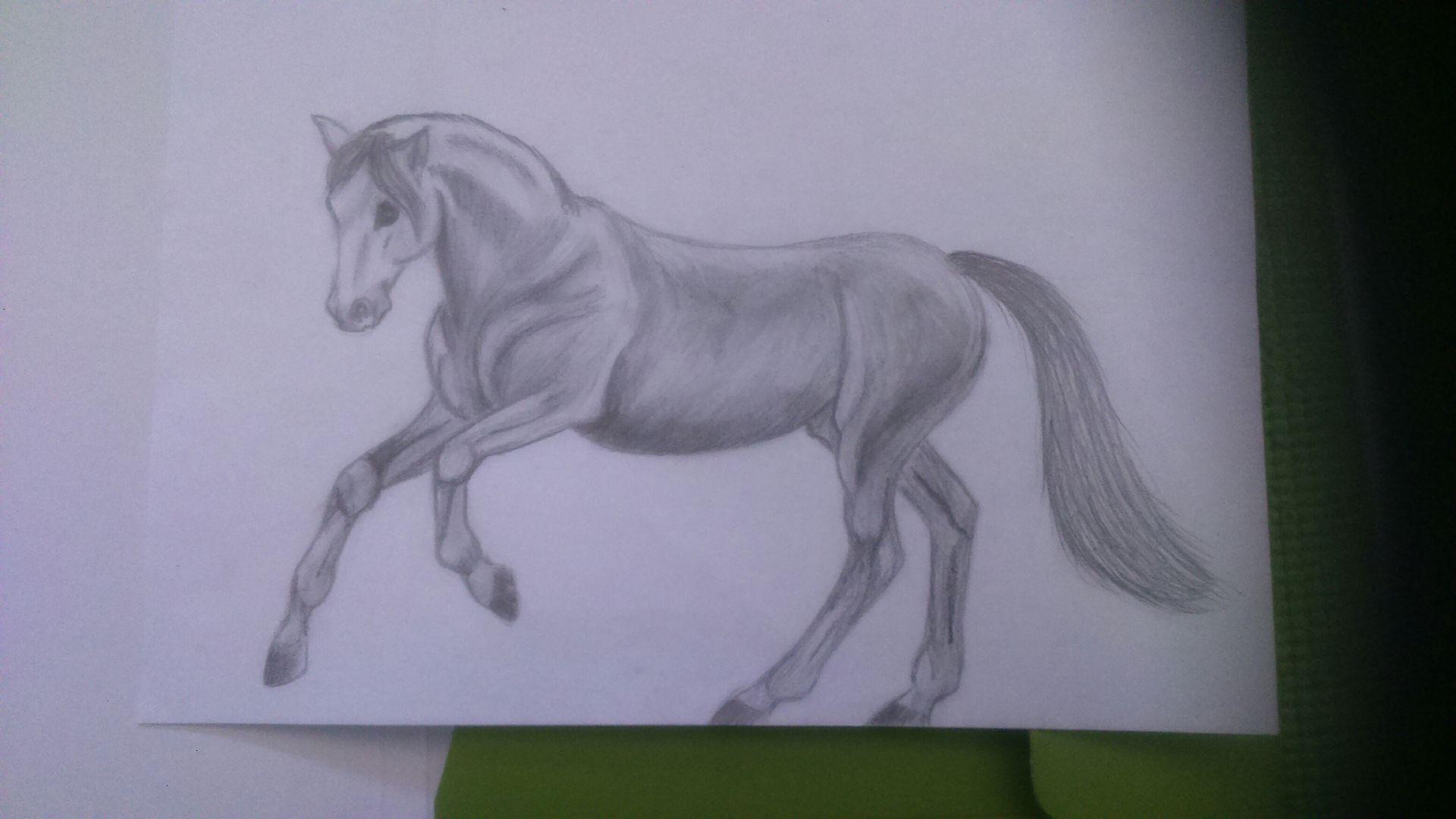 Meine Zeichnungen Und Kritzeleien 2016 17 Pferd Wattpad