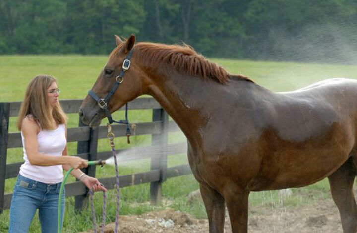 incomodidad del paso del caballo de