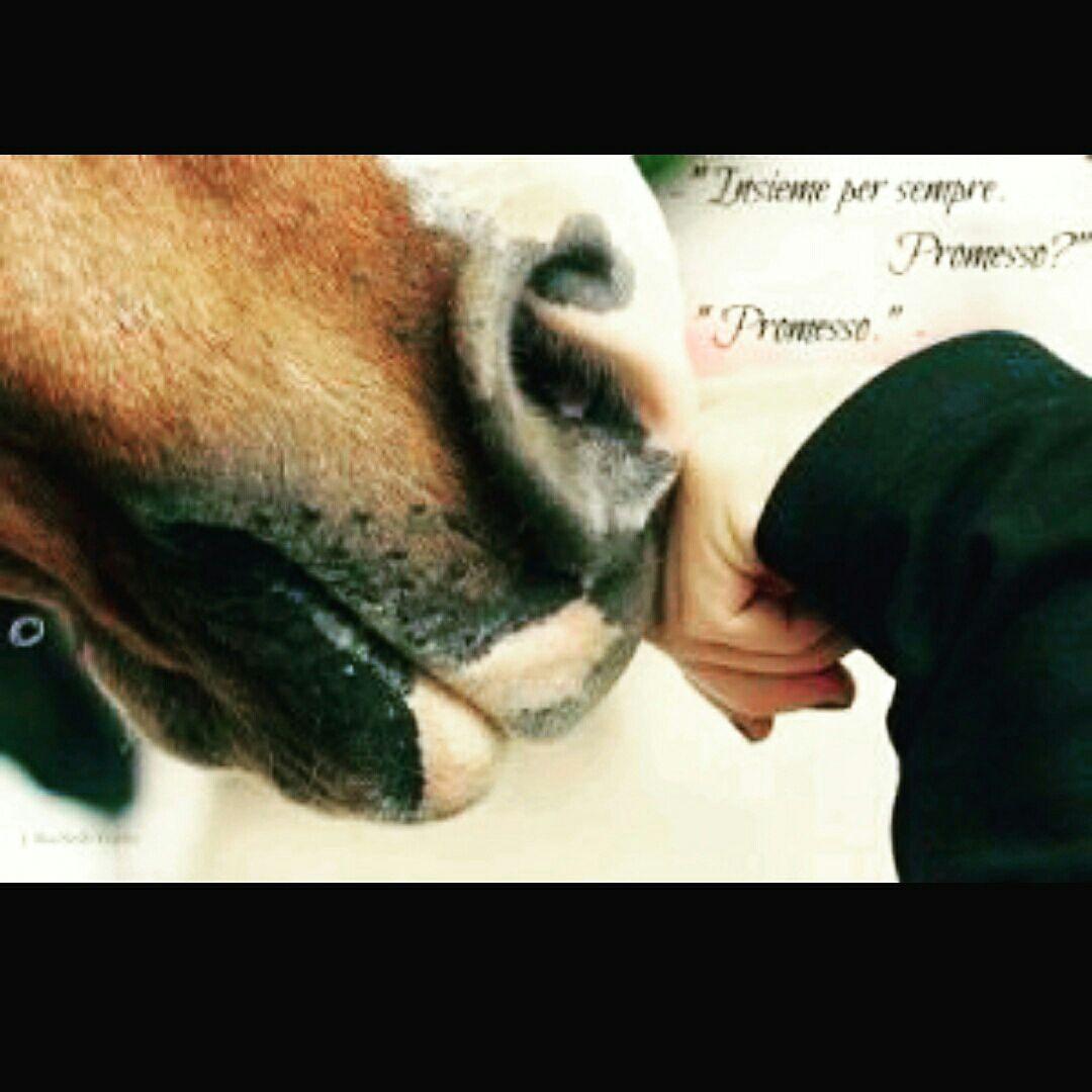 Amato Frasi sull'equitazione - 4 - Wattpad EU98