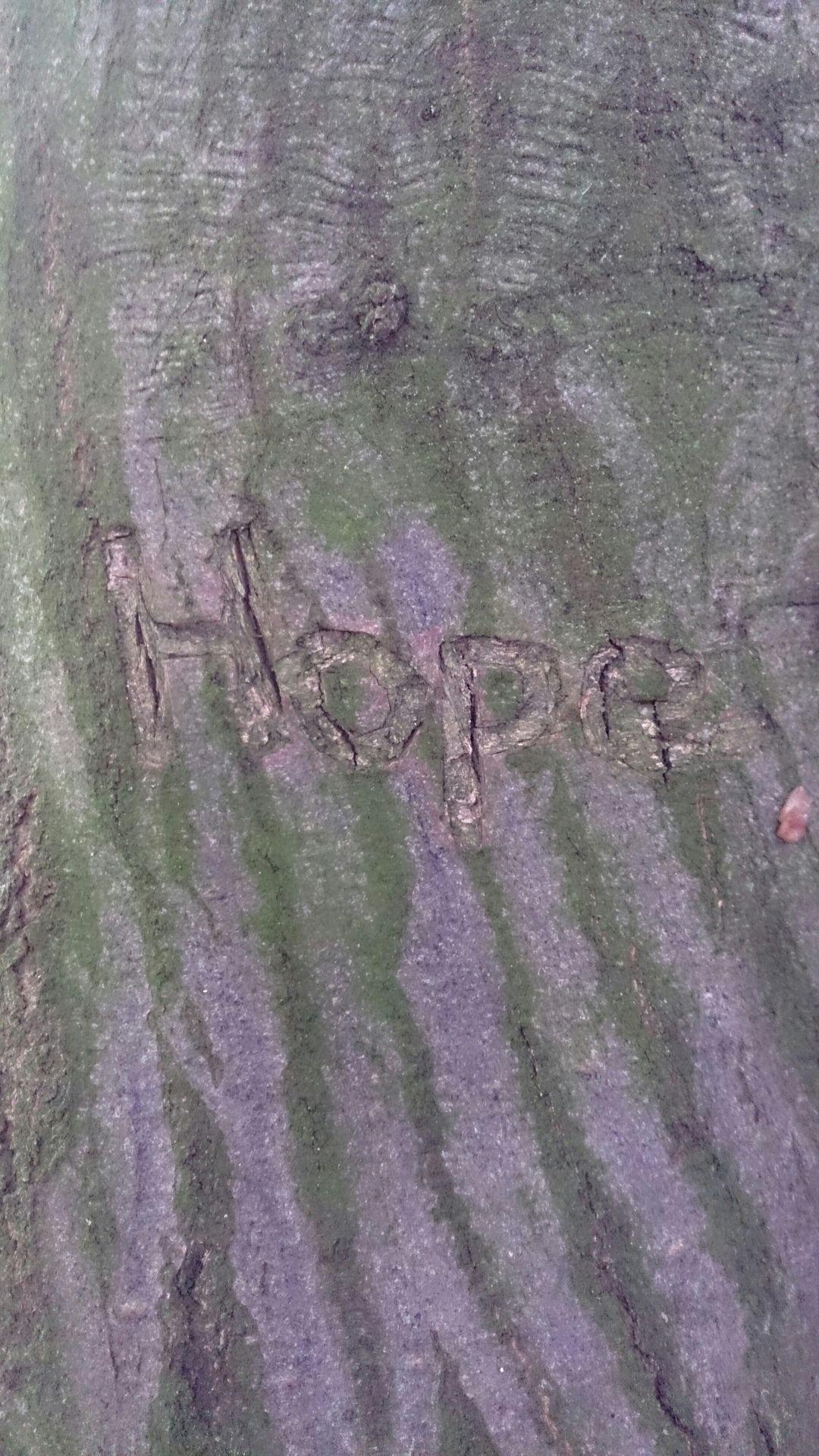 Gedichte Texte Gedanken Bäume Machen Glücklich Wattpad