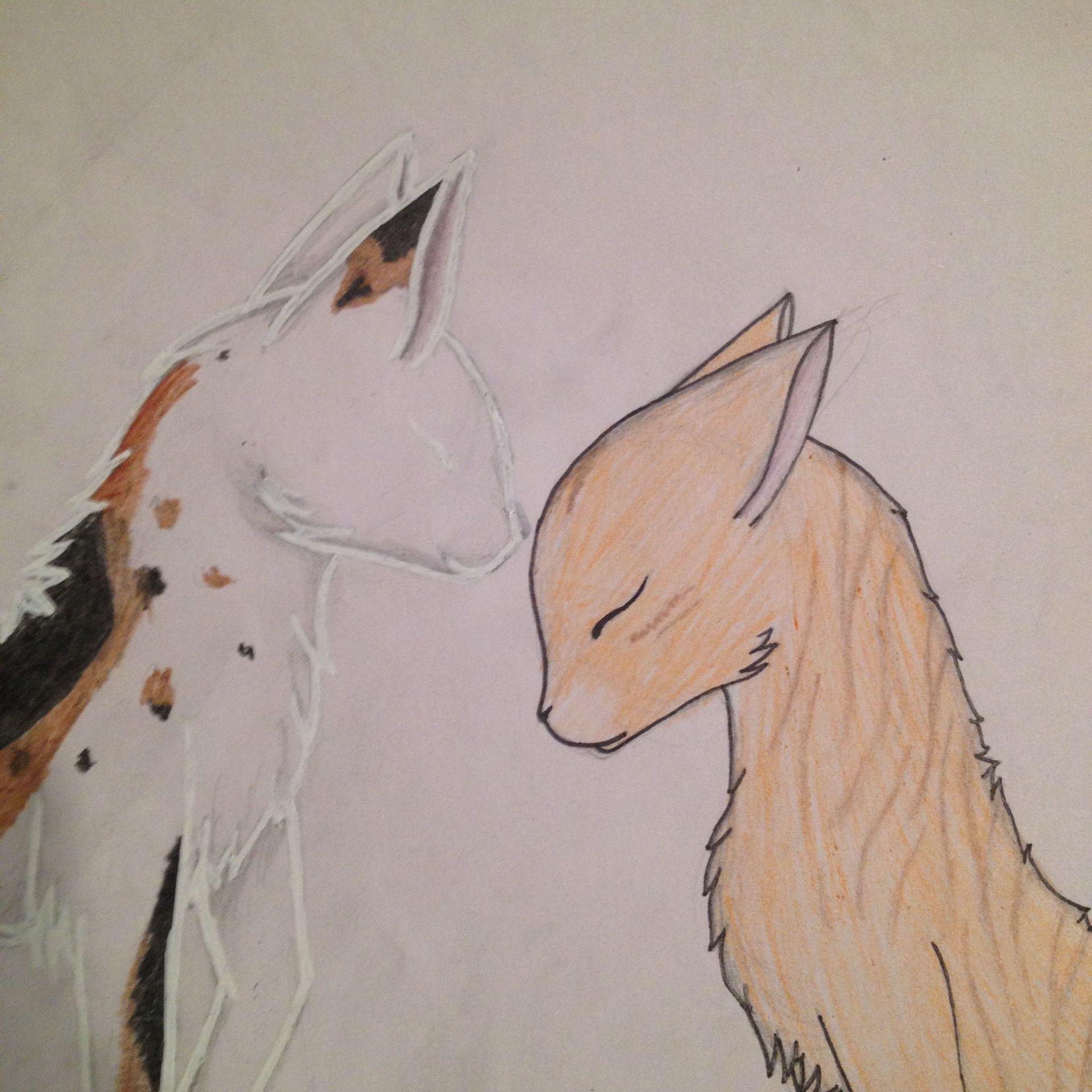 Meine Zeichnungen Warrior Cats Wattpad