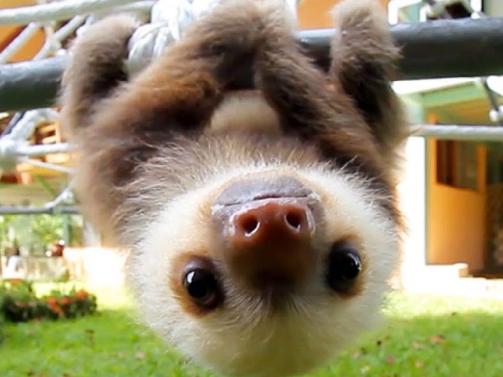 Funny Sloth Memes 2014 Animal Memes Youtube