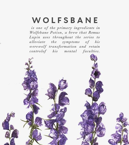 Harry Potter Imagines Wolfsbane Remus Lupin Wattpad