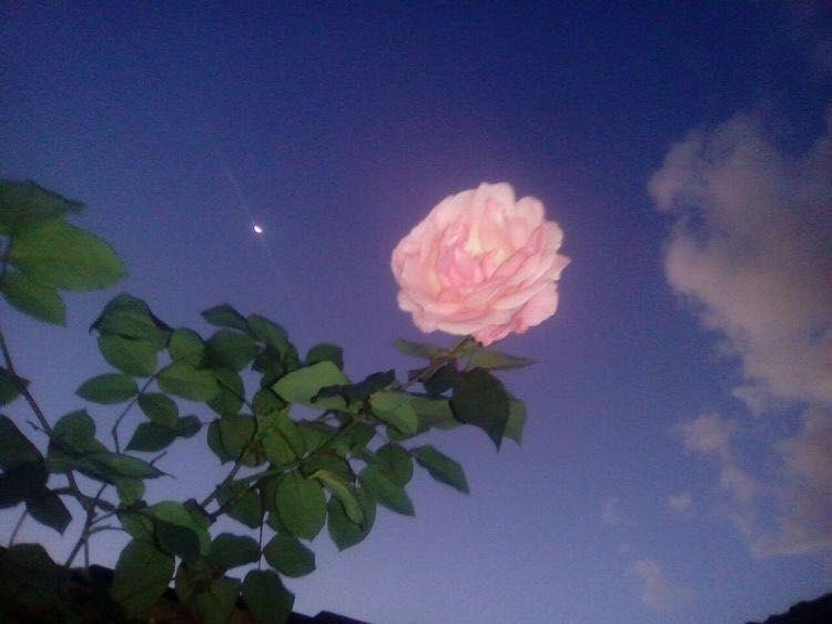 Rosen Sprüche Englisch 80 Schöne Englische Sprüche Für