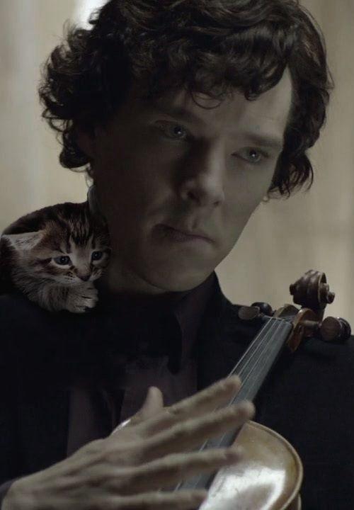 Random One Shots - (BBC)Sherlock Holmes x Cat!Reader ~ Sherlock Who