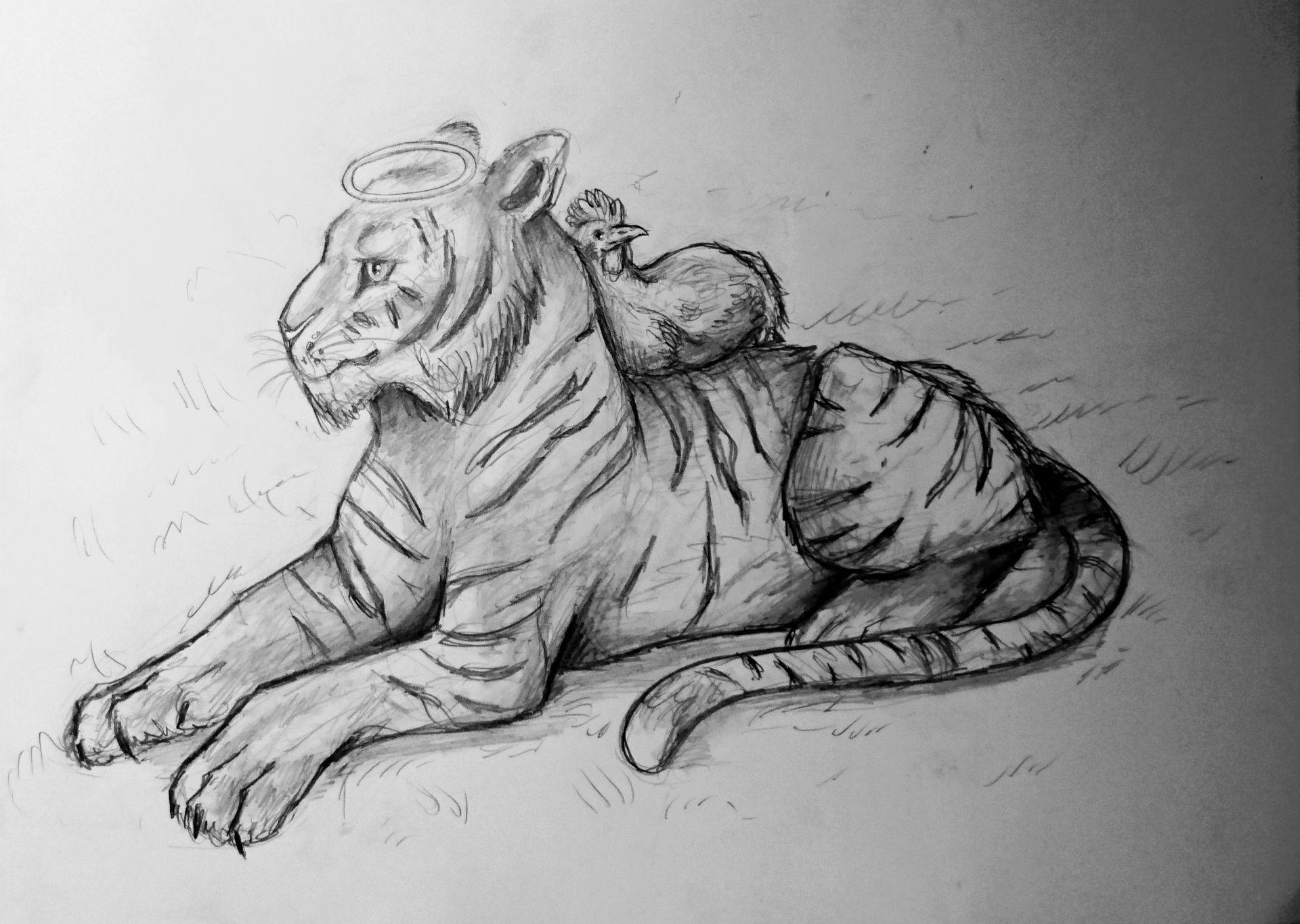 Meine Zeichnungen Tigerchicken Wattpad