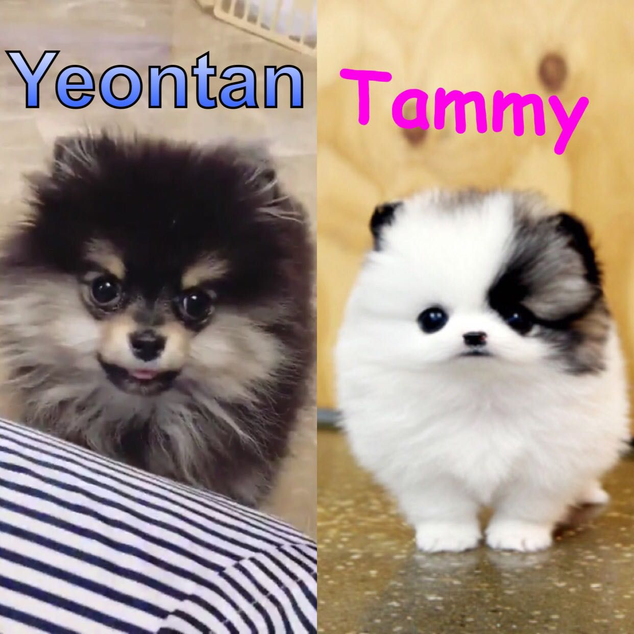 Yeontan's Little Sister - Meeting Them - Wattpad