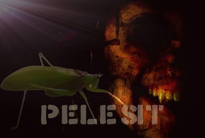 Pelesit ☑️ - 23 - Wattpad
