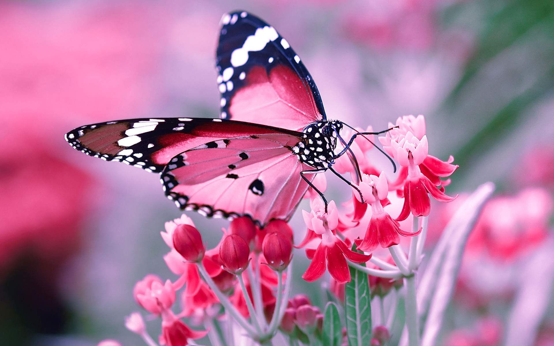 Image result for flowers with butterfly