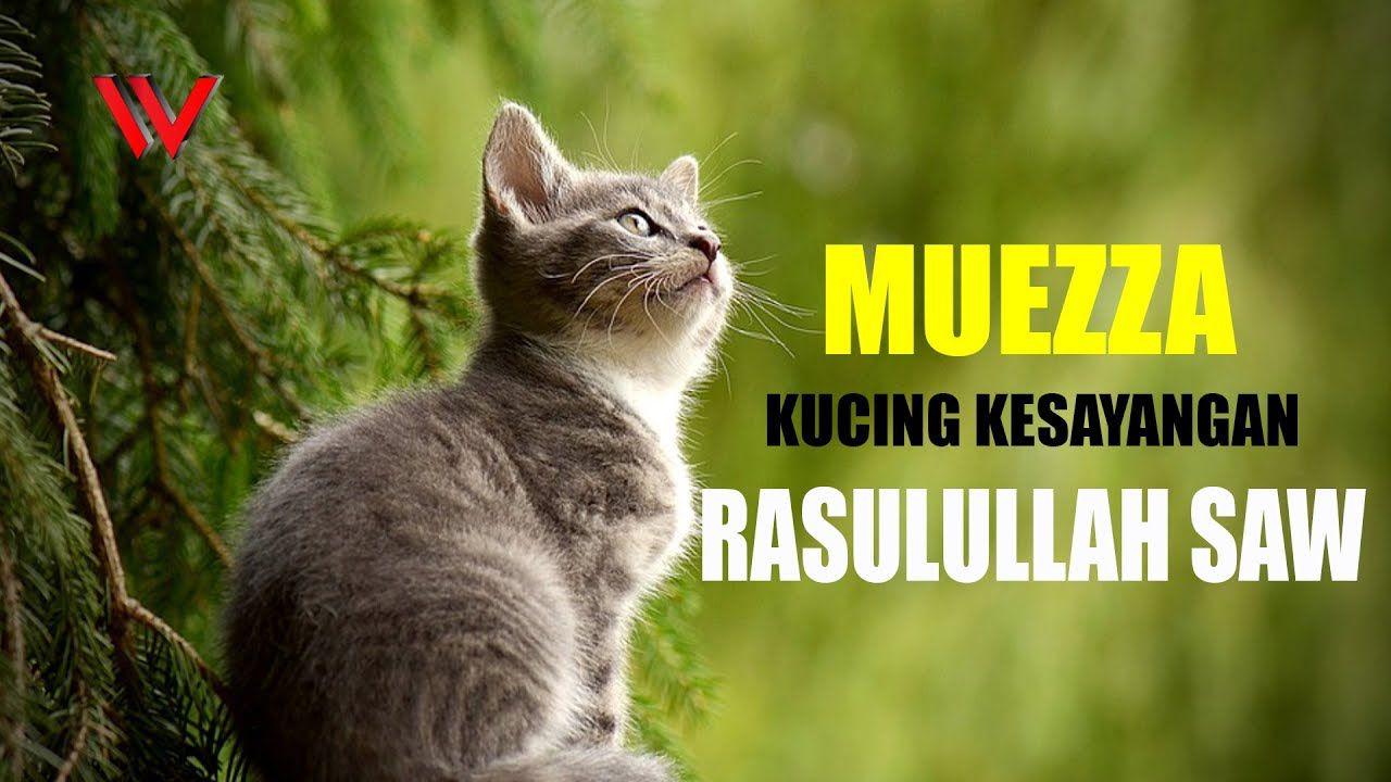 Penciptaan Fauna Sirah Nabi Muhammad Saw Kucing Kesayangan Wattpad