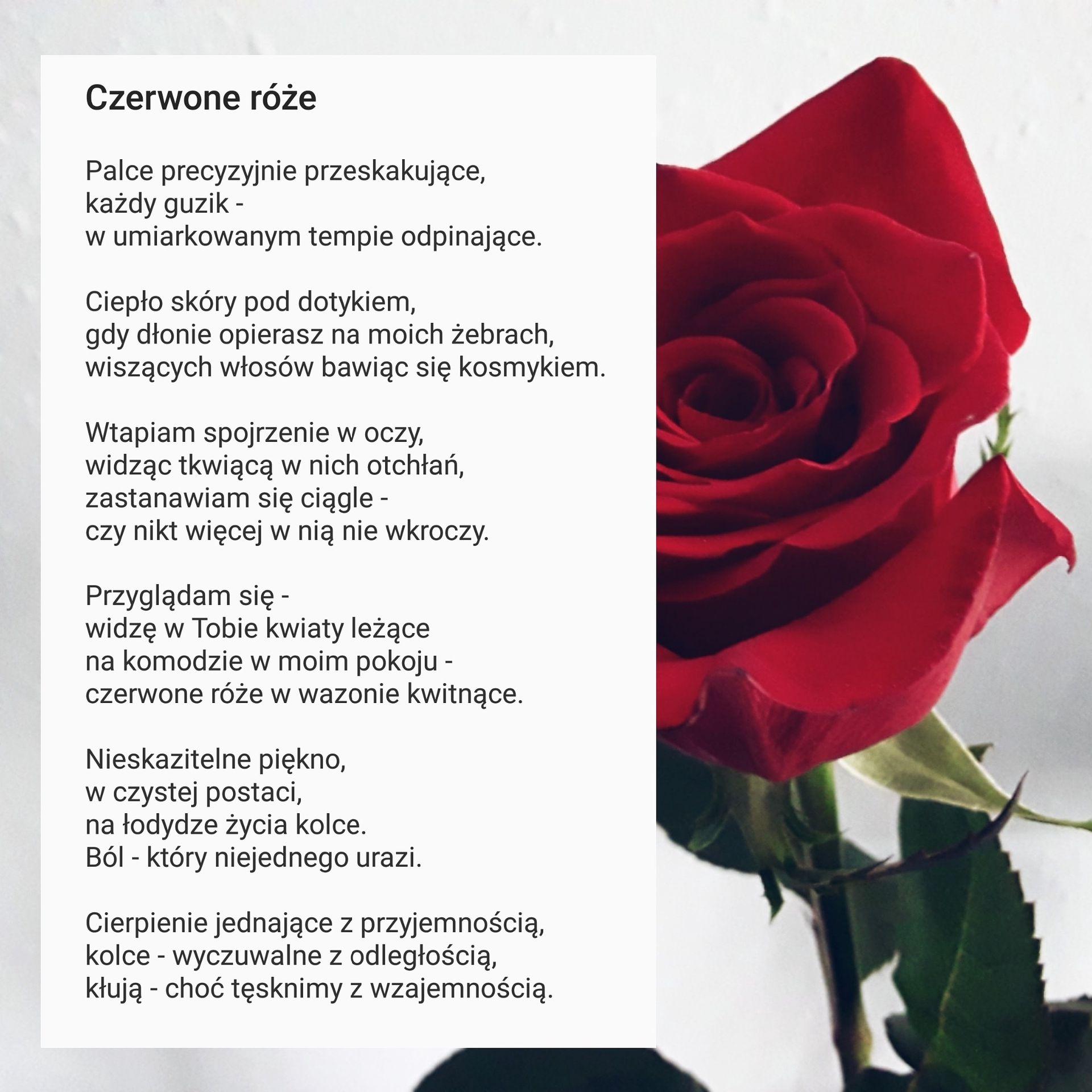 Czerwone Róże Kwitnące Czerwone Róże Wattpad