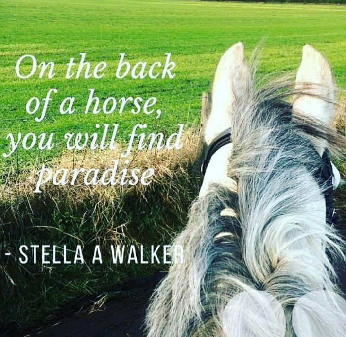 Horsey Quotes - Quote #43 - Wattpad
