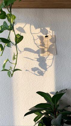 Bonsai Plant Shop 1 Wattpad